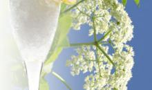 Holunderblüten-Sorbet